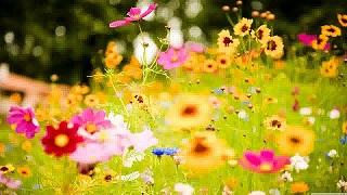 springsummerflowers